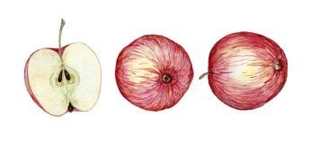 jabłka rysująca ręka Zdjęcie Royalty Free
