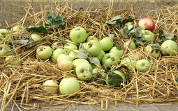 Jabłka target28_1_ na zakrywającym parciaku Zdjęcia Royalty Free