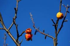 jabłka trwać fotografia stock