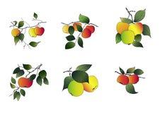 jabłka ustawiają Obrazy Royalty Free