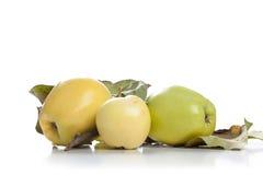 jabłka zielenieją odosobnionego dojrzałego biel Fotografia Stock