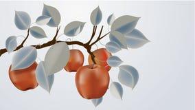 jabłko abstrakcjonistyczna gałąź Fotografia Royalty Free