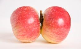 jabłko bliźniacy Obrazy Stock