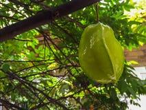 jabłko jako Asia daleko znajdująca owoc ja rodzaj znam przeważną gwiazdę Fotografia Royalty Free