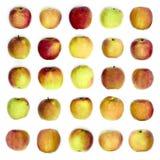 jabłko jako tło był może używać tapeta Obraz Royalty Free