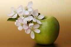 jabłko kwiaty zdjęcie royalty free