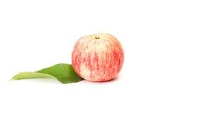 jabłko - liść zielony soczysty biel Obraz Stock