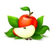 jabłko liście Zdjęcia Stock