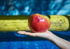 jabłko na ręce zdjęcia stock