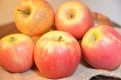 Jabłko owoc czerwień świeża Obraz Royalty Free