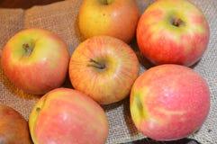 Jabłko owoc czerwień świeża Obrazy Royalty Free