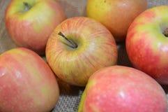 Jabłko owoc czerwień świeża Zdjęcia Royalty Free