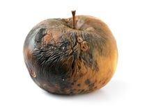 jabłko przegniły fotografia royalty free