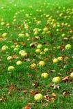 jabłko spada zdjęcie royalty free