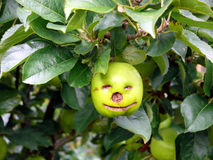 jabłko szczęśliwy Zdjęcia Royalty Free
