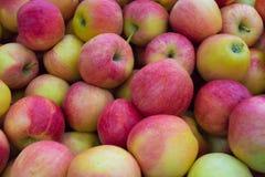 jabłko udział Obraz Stock