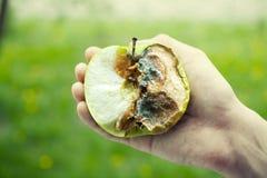 jabłko - zielonej ręki ludzki ukształtować przegniły Zdjęcia Stock