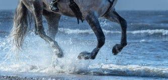 Jabłkowity konia bieg cwał na wodzie Nogi konia zakończenie up Obraz Royalty Free