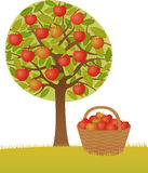 jabłoń Obrazy Stock