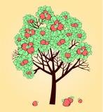 jabłoń Obraz Royalty Free