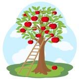 Jabłoń i drewniany schody Fotografia Royalty Free
