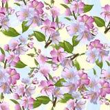 Jabłoń kwitnie bezszwowego wzór, wiosny okwitnięcie retro tła wektora ilustracja wektor