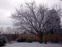 Jabłoń z śniegiem i lodem Zdjęcia Royalty Free