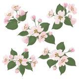 Jabłoni zieleń i kwiaty opuszczają set Zdjęcie Stock