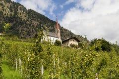 Jabłonie w południowym Tyrol, Italy Zdjęcia Stock