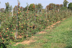 Jabłonie z stosami fotografia stock