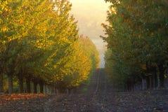 Jabłczana plantacja Obrazy Royalty Free