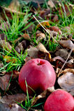 jabłczana ziemia Fotografia Royalty Free