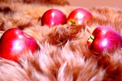 jabłczany futerko Zdjęcia Royalty Free