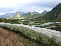 Jabłczany masowa produkcja sad w France provance Zdjęcia Royalty Free