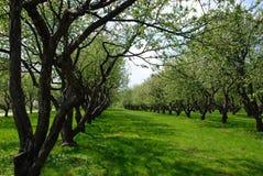 jabłczany sad Obraz Stock