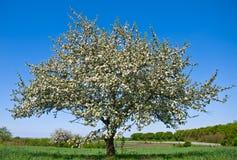 jabłczany target334_0_ drzewo Obraz Royalty Free