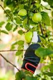 jabłek target4479_1_ Fotografia Stock