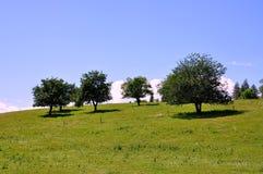 jabłek wsi drzewa obraz royalty free