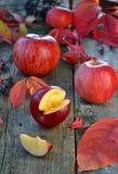 Jabłka Fotografia Royalty Free