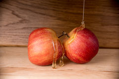 Jabłka i miód Zdjęcie Royalty Free