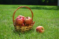 Jabłka, kosz, lato, trawa, witaminy, owoc Zdjęcia Stock