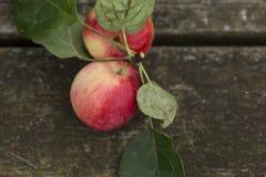 Jabłka na drewnianym tle Zdjęcie Stock