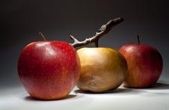 jabłka naturalny sztuczny Zdjęcia Royalty Free