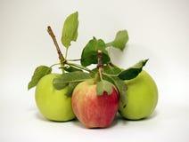 jabłka odizolowane Zdjęcie Royalty Free