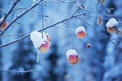 jabłka snow drzewo obrazy stock