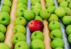 Jabłka sortuje i pakuje Obraz Stock