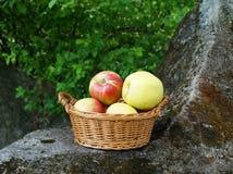 Jabłka w koszu Zdjęcia Royalty Free