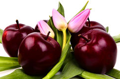 Jabłka z tulipanami Zdjęcie Stock