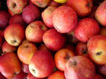 jabłko Obraz Stock