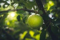 jabłko mokre Zdjęcie Royalty Free